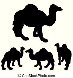 silueta, perspectiva, relacionado, ramadan, aislado, camello, estacional, elemento, blanco, 1, diseño, simple, 4