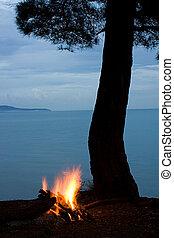 silueta, plano de fondo, árbol, campfire, mar, noche, scene: