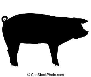 silueta, porca