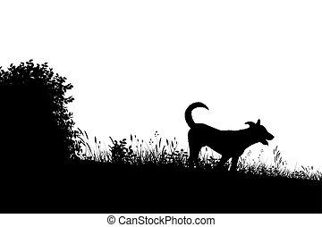 silueta, pradera, perro