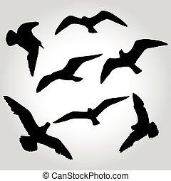 silueta, símbolo, ilustración, vector, gaviota, logotipo,...
