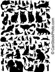 silueta, set., doméstico, ilustração, gato, vetorial, pretas