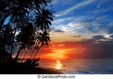 silueta, sobre, árvores, palma, mar, pôr do sol