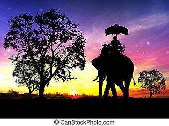 silueta, tailandia, elefante