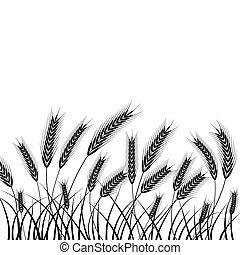 silueta, trigo, orelhas