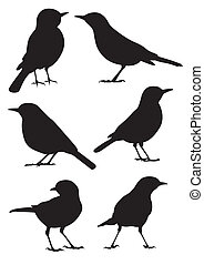 silueta, vector, -, aves