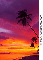 silueta, vertical, panorama, sobre, árvores, oceânicos, tropicais, pôr do sol, palma