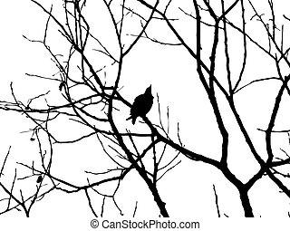 silueta, vetorial, starling, árvore