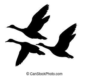 silueta, voando, patos, vetorial, fundo, branca
