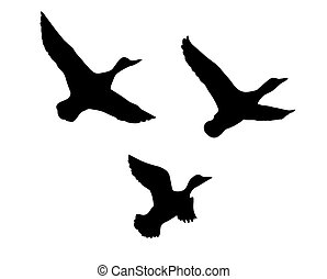 silueta, vuelo, pato, blanco, bac