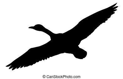 silueta, vuelo, patos, blanco, plano de fondo