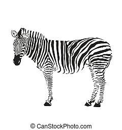 silueta, zebra