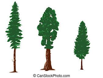 siluetas, árboles de pino