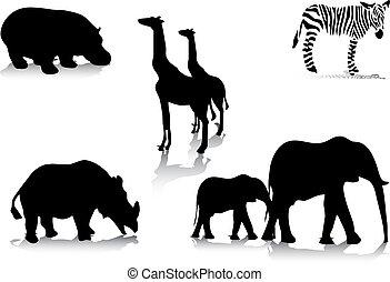 siluetas, animal, africano