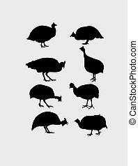 siluetas, aves de guinea