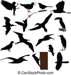 siluetas, aves