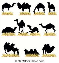 siluetas, camellos, conjunto