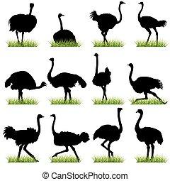 siluetas, conjunto, avestruces