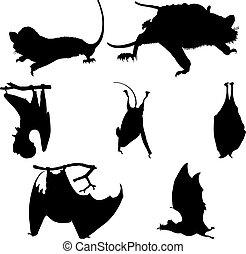 siluetas, conjunto, murciélagos