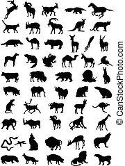 siluetas, de, animal, negro, colour., un, vector, ilustración