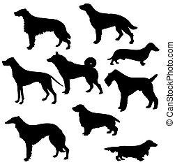 siluetas, de, el, sorts, caza, perros, blanco, plano de fondo
