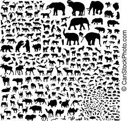 siluetas, de, fauna, asia