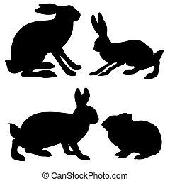 siluetas, liebre, y, conejo, blanco, plano de fondo