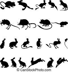 siluetas, roedores