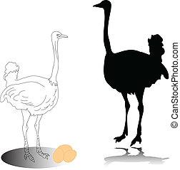 siluetas, vector, avestruz
