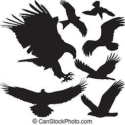 siluetas, vector, presa, aves