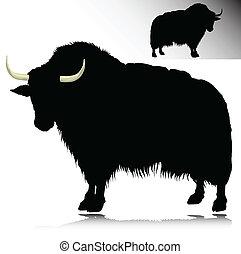 siluetas, vector, yak