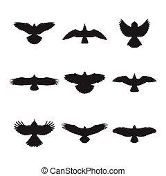 siluetas, vuelo, conjunto, pájaro
