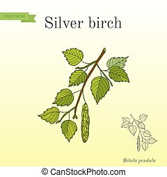 Silver birch branch with green leaves. Hand drawn botanical...