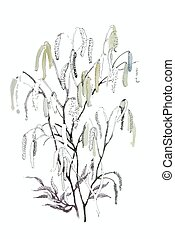 Silver birch catkin isolated on a white background -...