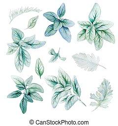 Silver flora, lamb ears leaves, Watercolor bright greenery