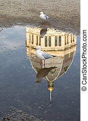 Silver Gull standing on wet ground with reflection a...
