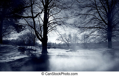Sunlight shining through trees and mist in winter