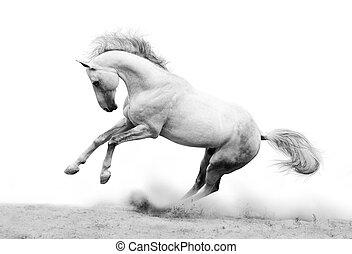silver-white, étalon