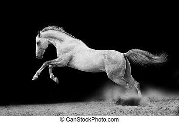 silver-white, garanhão, ligado, pretas