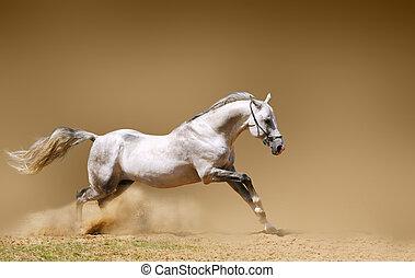 silver-white stallion in dust