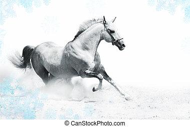 silver-white stallion