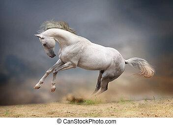 silver-white stallion in storm