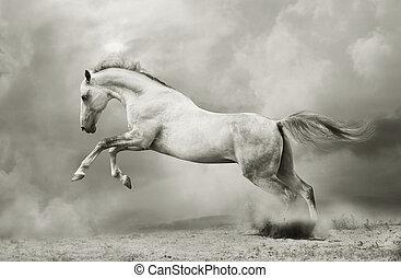 silver-white stallion on black