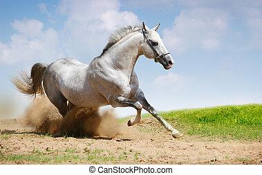silver-white stallion on field