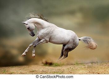 silver-white stallion playing