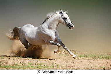 silver-white, stallone, in, polvere
