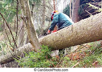 silvicultura, trabajador