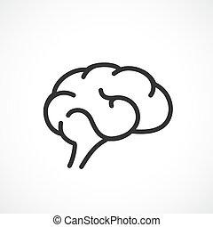 Brain anatomy outline  Outline human brain anatomy central