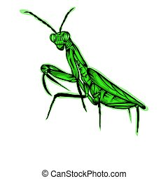 Simple design of illustration Praying mantis on White background