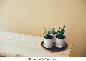 green plants on a wooden table